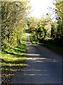 N5173 : Tree-lined minor road near Bogwood Lough by Oliver Dixon