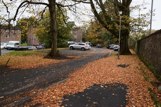 Fallen leaves, T & F grounds, Omagh