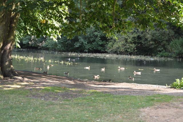 Ducks, The Dyke