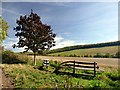 SE9332 : Benches on the Yorkshire Wolds Way by Graham Hogg