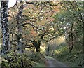 SH7356 : Y ffordd o Bont Ty-Hyll i Bont Cyfyng / The road from Pont Ty-Hyll to Pont Cyfyng (2) by Ceri Thomas