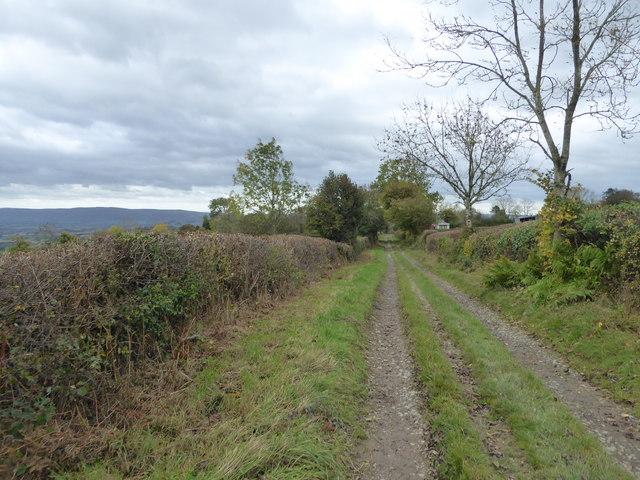 Hillside track at Bankshead near Bishops Castle