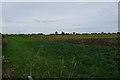 SK8424 : Field of sunflowers by Bob Harvey