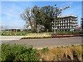 TL4260 : Eddington: Veteran Oak Gardens by John Sutton
