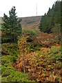 SE1004 : Autumn colour  in Holme Woods Dyke by Graham Hogg