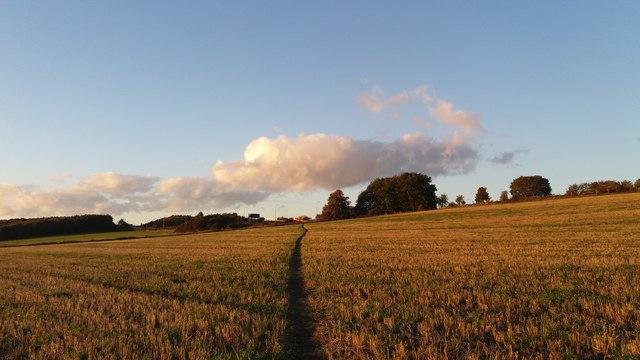 Footpath through the farm fields