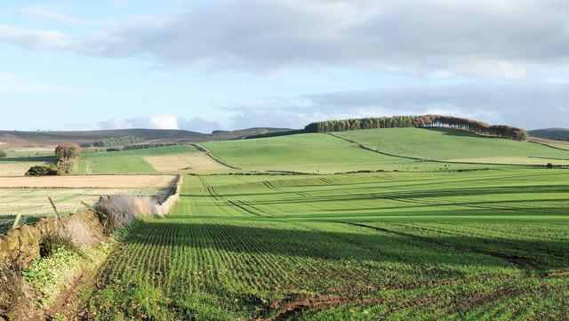 Field with emerging crop near Hatton of Ogilvie