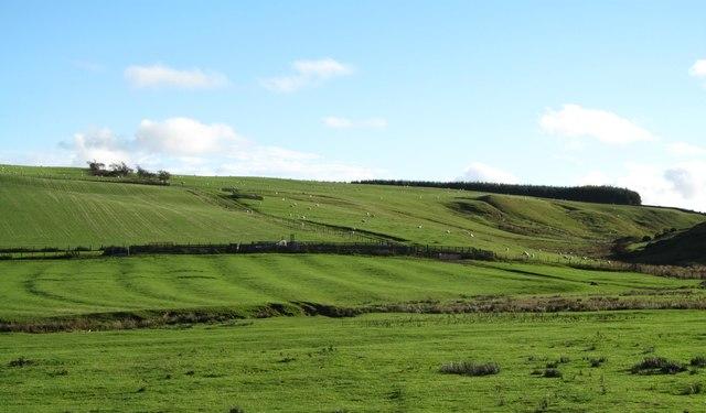 Ridge and furrow near Alnham