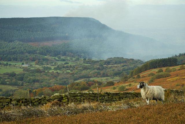 A moorjock on Barker's Ridge