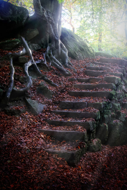 Stone steps and roots in Yarncliff Wood