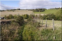NO3151 : Green lane, Airlie by Richard Webb