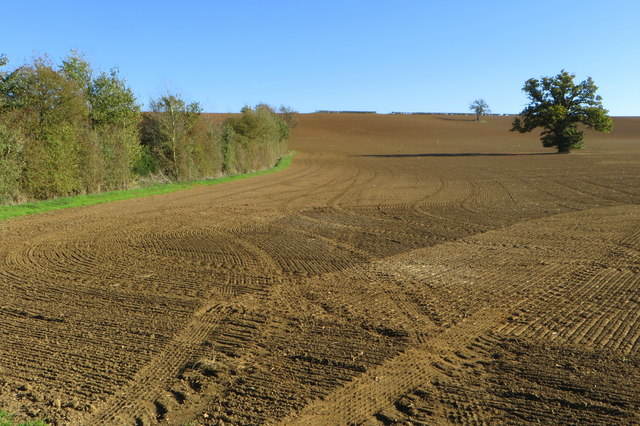 Field, hedge and trees