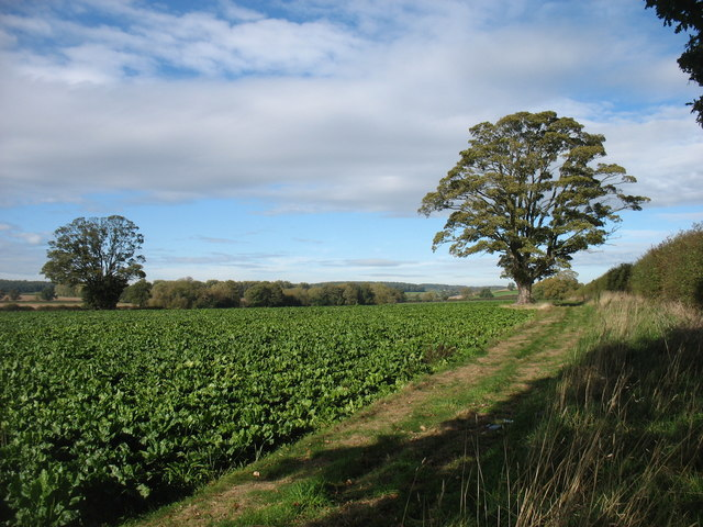 Farmland beside the A41
