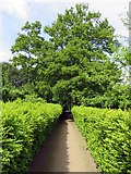 SD4615 : Garden path at Rufford Old Hall by Steve Daniels
