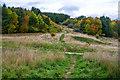 SK4761 : Ashfield : Silverhill Wood by Lewis Clarke
