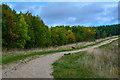 SK4662 : Ashfield : Silverhill Wood Country Park by Lewis Clarke