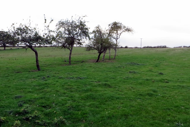 Sparse hedge line in an ancient field