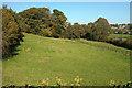 SX4772 : Field, Crowndale Farm by Derek Harper