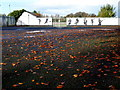 H4573 : Fallen leaves, St. Patrick's Park, Omagh by Kenneth  Allen