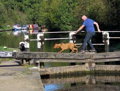 TQ0586 : Cautious crossing at Denham Lock by Andrew Curtis