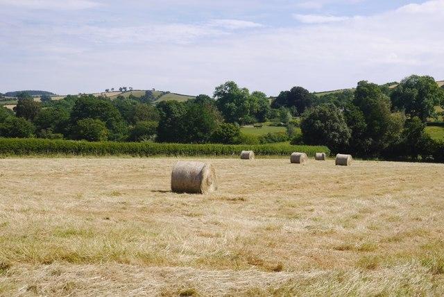 Baled hay, Purlogue