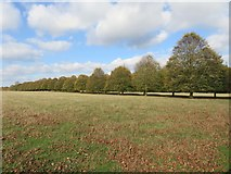 SP4317 : Trees in the Great Park by Steve Daniels