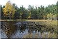 NH9619 : Woodland Pond by Anne Burgess