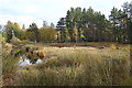 NH9819 : Boggy Pond by Anne Burgess