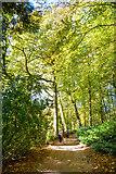 ST7734 : Wiltshire : Stourhead - Footpath by Lewis Clarke