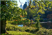 ST7734 : Wiltshire : Lily Pond by Lewis Clarke