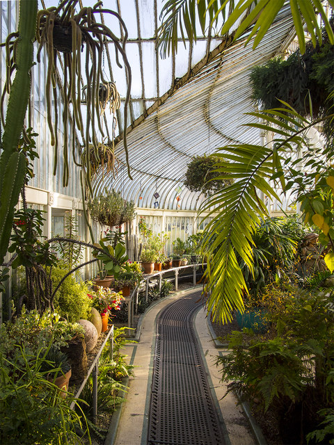 Inside the Palm House, Belfast