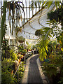 J3372 : Inside the Palm House, Belfast by Rossographer
