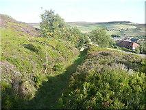 SE0028 : A row of Rowan trees alongside Wadsworth FP28, Old Town by Humphrey Bolton