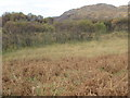 NM6874 : Scrub birches struggling to colonise a boggy patch on a Kinlochmoidart Estate hillside by ian shiell