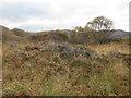 NM6874 : Flora at the foot of Cruach na Cuilidh Bige near Loch Moidart by ian shiell