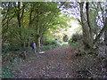 SO8498 : Pheasant Path by Gordon Griffiths