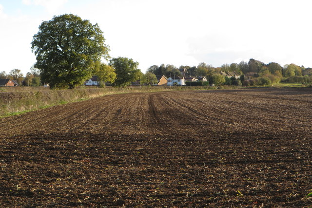 Field by Milton Malsor