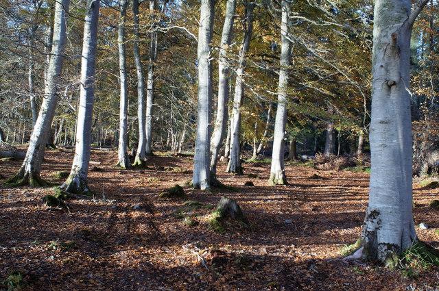 Broadleaf habitat of Evanton Community Wood