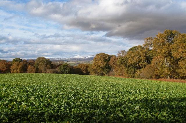Colour in the Black Isle autumn landscape