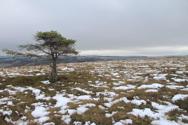 Lone Tree on the Moss of Glenmarkie