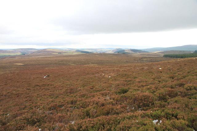 Moorland above Glen Markie