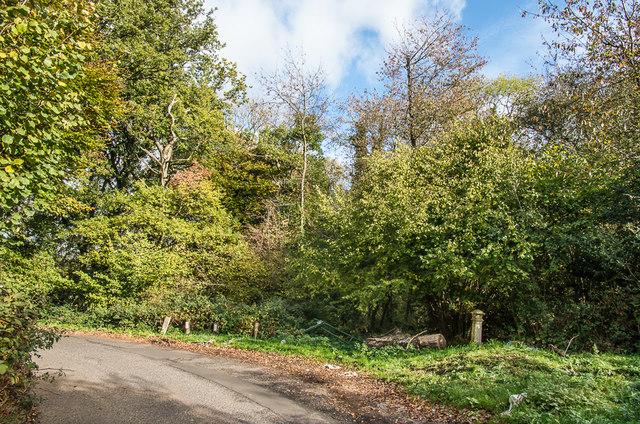 Ditches Lane