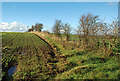 NS3629 : Farmland Near Monkton by Mary and Angus Hogg