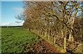 NS3629 : South Ayrshire Farmland by Mary and Angus Hogg