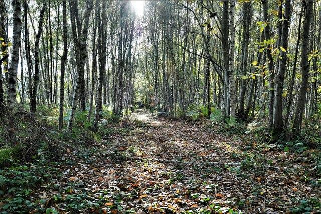 Barnetts Wood