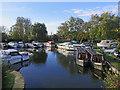 TL5479 : Ely: basin next to Bridge Boatyard by John Sutton