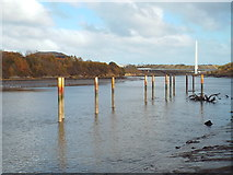 NZ3557 : Jetty posts in the River Wear, near South Hylton by Malc McDonald