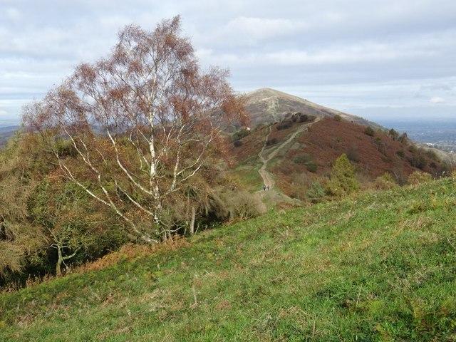 Silver birch tree on the Malvern Hills