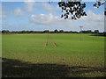 TG1639 : Field by Bennington's Lane by Hugh Venables