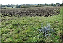 TG2403 : Fields and some barbed wire on High Ash Farm by Evelyn Simak